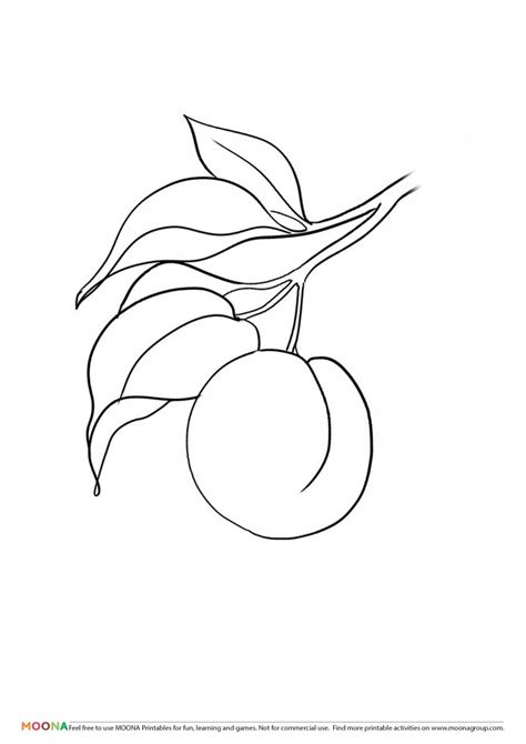 printable coloring pages moona fruits  berries
