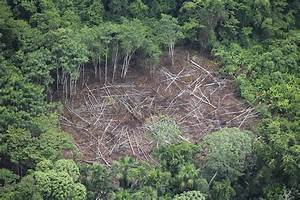 Amazonian Warriors Capture and Strip Illegal Rainforest ...