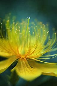 Best 25 ideas about lovely flowers find what youll love beautiful exotic yellow flowers mightylinksfo