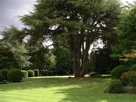 trees for garden file ansty hall rear garden trees 19j08 jpg wikimedia commons