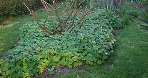 Couvre Sol Vivace : plante vivace couvre sol pivoine etc ~ Premium-room.com Idées de Décoration