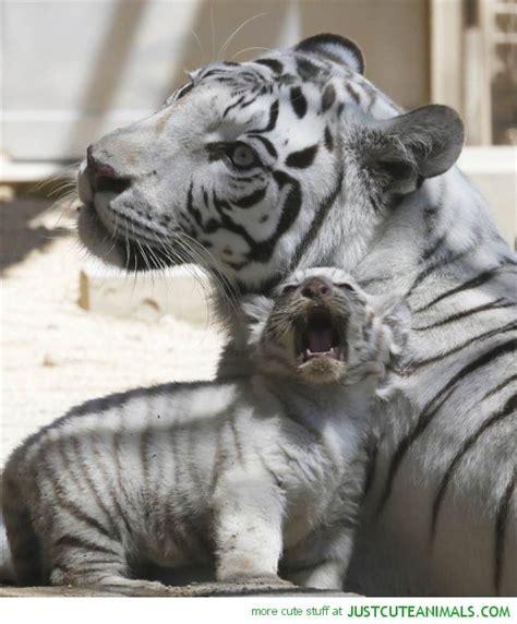 Amazing Photos Beautiful Animals World Inside Pictures