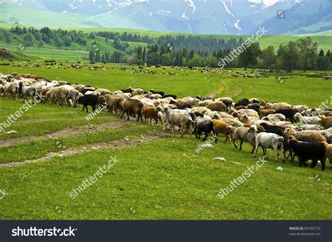Beautiful Farm Field Stock Photo 89792710 Shutterstock
