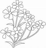 Coloring Flower Breath Pages Jasmine Plant Spinach Periwinkle Babys Drawing Cosmos Flowers Roses Parts Colouring Opposites Printable Getcolorings Cross Plants sketch template