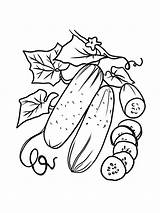 Cucumber Coloring Vegetable Fruit Eggplant Bitter Gaddynippercrayons Included Annual Short Tomatoes Cucumbers Crops Lived Pumpkin Such Melon Printable Christmas Tree sketch template