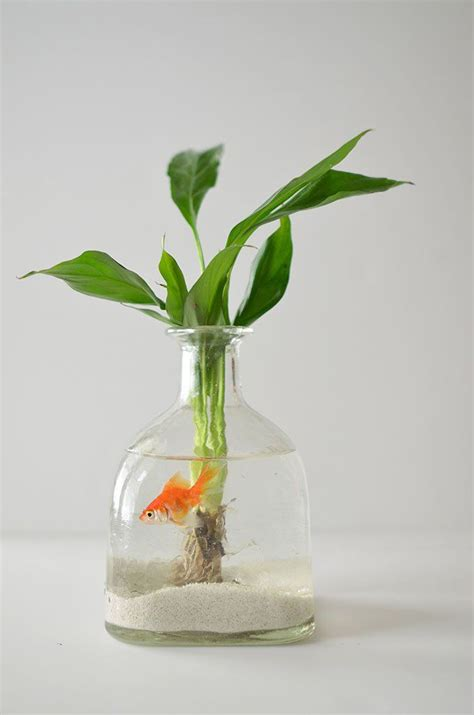 make a hanging l diy how to make a hanging aquarium out of recycled patron