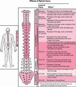 Spinal Paralysis Chart