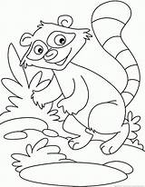 Raccoon Coloring Baby Drawing Pages Animal Getdrawings 123coloringpages sketch template