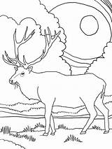 Elk Coloring Pages Mountain Rocky Printable Clipart Sheets Winter Colour Clip Deer Library Worksheets sketch template