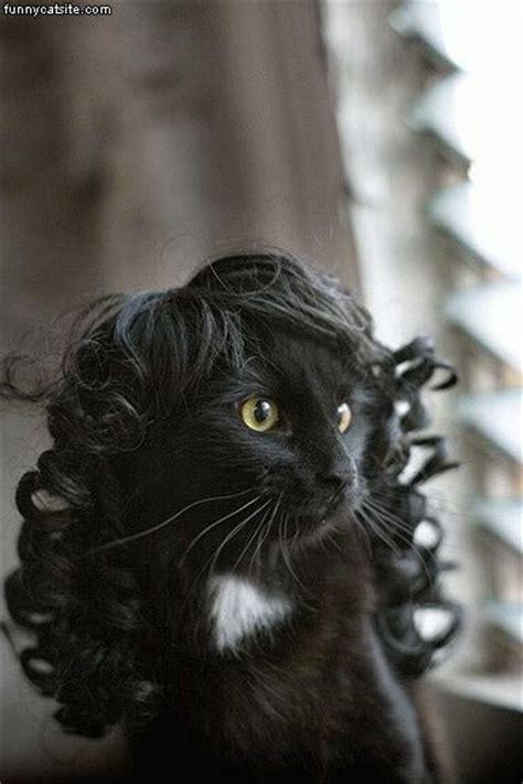 cats wig funny cat wigs wigs  cat nice wigs  cat