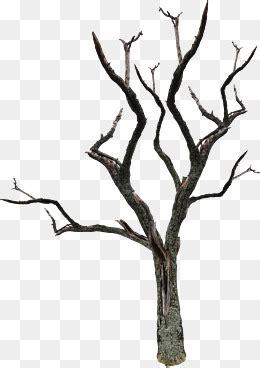 dead tree material png images vectors  psd files
