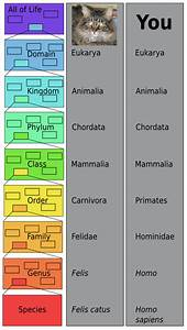 What Is The Modern Classification System Of Organisms