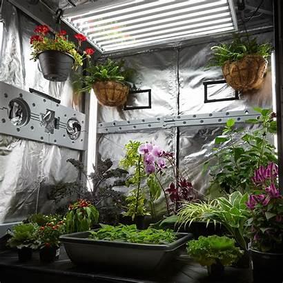Grow Greenhouse Tent Indoor Garden Vegetable Kit