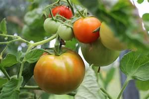 Altes Haus Dämmen Ja Oder Nein : regenschutz f r tomaten tomatendach als regenschutz ~ Michelbontemps.com Haus und Dekorationen