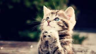 bango cat showing what a sincere prayer is like god will surely