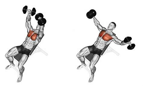 Pec Deck Flyes Target Muscles by Incline Dumbbell Flyes Exercise Workout Chart