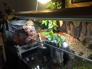 Pflanzen Terrarium Einrichten : landschildkr tenbabies ~ Orissabook.com Haus und Dekorationen