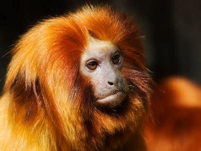 vanishing amazonia vanishing biodiversity   amazon