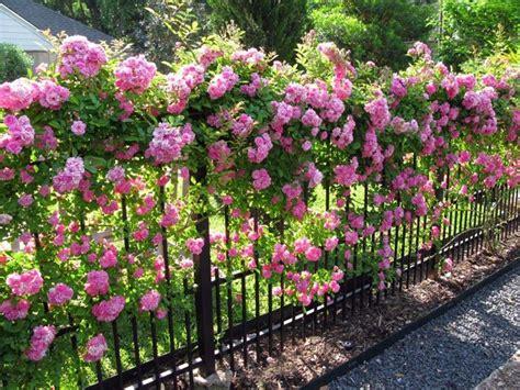 giardini e fiori fiori da giardino piante da giardino decorazione giardini