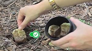 Sachets De Thé À Remplir : ne jetez plus vos sachets de th 10 bonnes raisons de les planter dans le jardin ~ Melissatoandfro.com Idées de Décoration