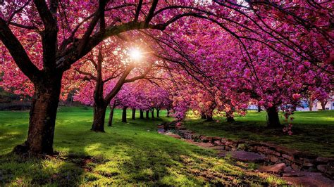 spring wallpapers hd  background pictures
