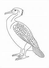 Albatross Coloring Pages Coloringbay sketch template