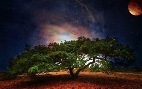 Baum Weltall Planet Sternnacht Hintergrundbilder Baum