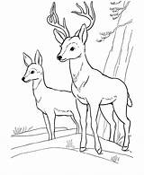 Deer Coloring Pages Printable Buck Sheet Hunting Animal Fawn Easy Printables sketch template