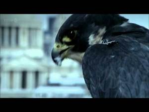 Animal House - Attenborough's Message - Share the World