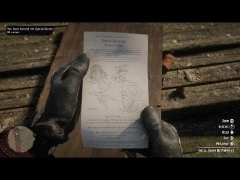 Red Dead Redemption 2 Special Snake Oil Pamphlet Location