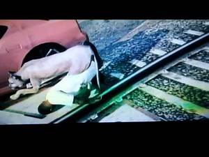 GTA 5 killed by mountain lion