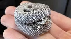 Snakes Can Be Cute Too - Funny Snake Video 2021 | Pets Town