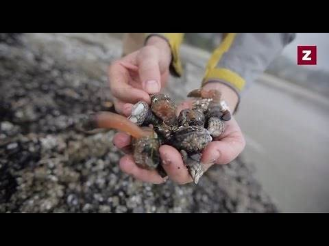 Percebes: Hunting for Oregon's Secret Ingredient - Zagat Documentaries, Episode 9