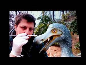Dodo Birds: may not be extinct after all!!! NEW 2018 Info