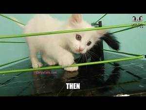 Kitten Wrestling Then and Now 🤣
