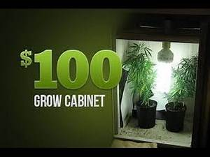 How Marijuana Plants Flourish Under Energy-Saving LED Lights at home