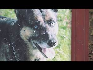 Dog run over, shot dead by police