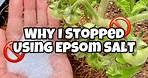 Epsom Salt for Plants - Why I Stopped Using Epsom Salt in the Garden