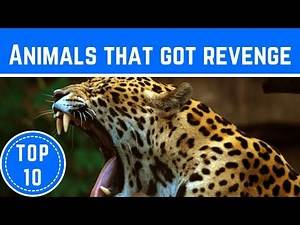 Top 10 Insane Stories Of Animals Taking Revenge On Humans - TTC