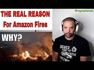 The Real Reason For The Amazon Rainforest Fires