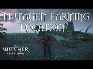 The Witcher 3 Mutation Farming Location After Patch 1.30 - 2016