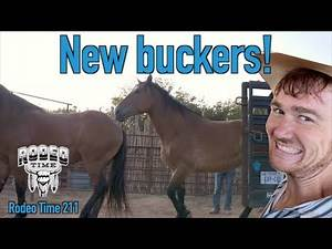 New buckin horses at Radiator Ranch - Rodeo Time 211