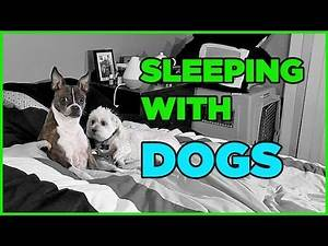 MY DOGS WON'T LET ME SLEEP - Living With Dogs