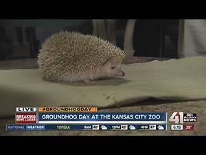 Groundhog Day at the KC Zoo
