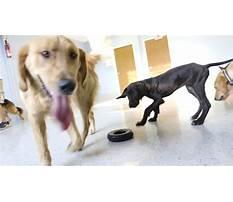 A better canine dog training inc overland park ks Plan