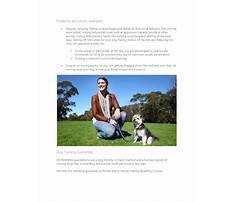A better way dog training.aspx Plan
