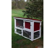About rabbits and bunnies Plan