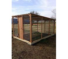 Affordable diy chicken coop Plan