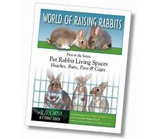 All about bunnies Plan