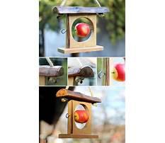 Apple bird feeders craft Plan